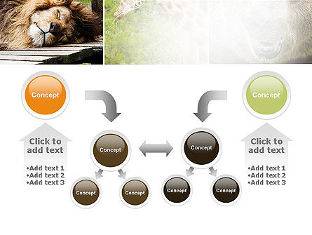Wild Animals PowerPoint Template Slide 19
