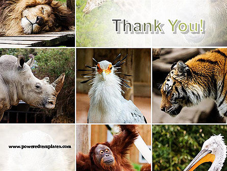 Wild Animals PowerPoint Template Slide 20