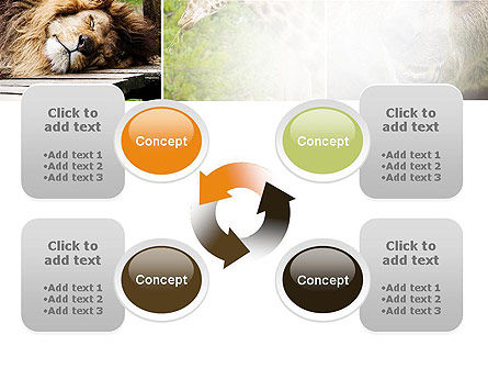 Wild Animals PowerPoint Template Slide 9