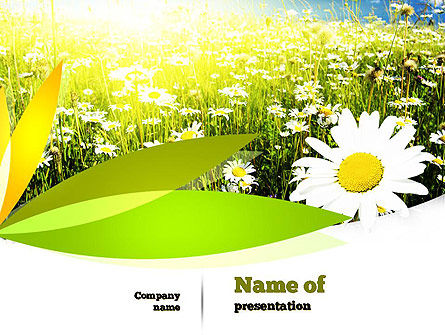 Nature & Environment: Ox-eye Daisy Camomile PowerPoint Template #11157