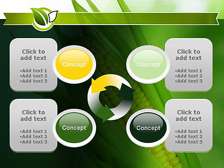 Corn On The Cob PowerPoint Template Slide 9