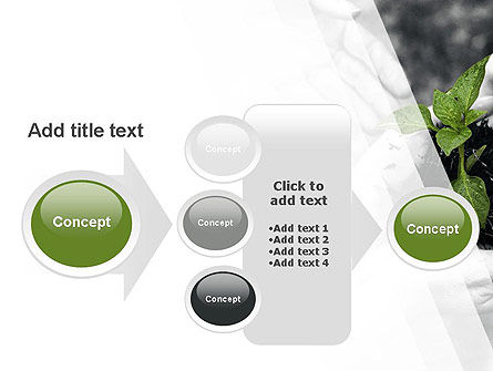 Sprout In Careful Hands PowerPoint Template Slide 17