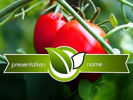 Ripe Tomatoes PowerPoint Template, 11371, Agriculture — PoweredTemplate.com