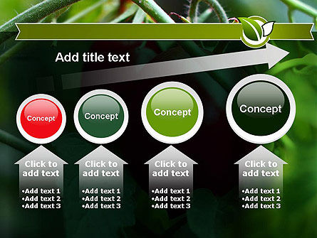 Ripe Tomatoes PowerPoint Template Slide 13