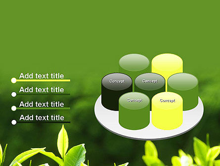 Young Tea Leaves PowerPoint Template Slide 12