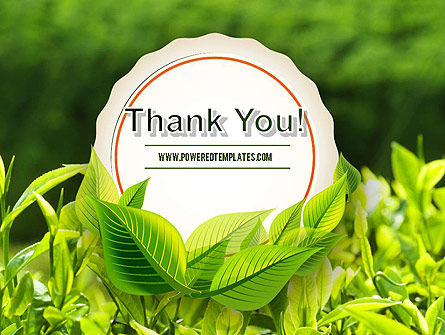 Young Tea Leaves PowerPoint Template Slide 20