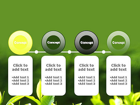 Young Tea Leaves PowerPoint Template Slide 5
