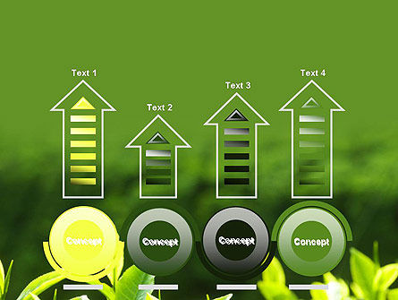 Young Tea Leaves PowerPoint Template Slide 7