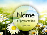 Nature & Environment: Daisy In The Sun PowerPoint Template #11489