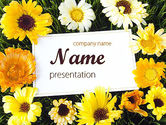 Holiday/Special Occasion: Greeting Card with Flowers PowerPoint Template #11502