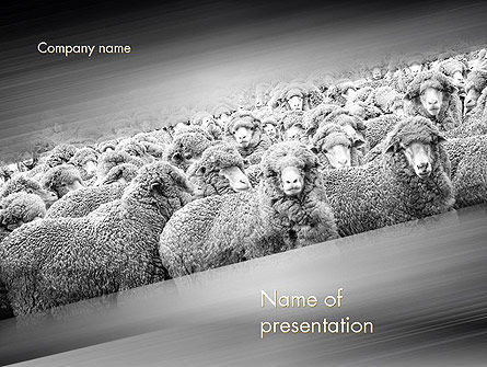 Flock of Sheep PowerPoint Template