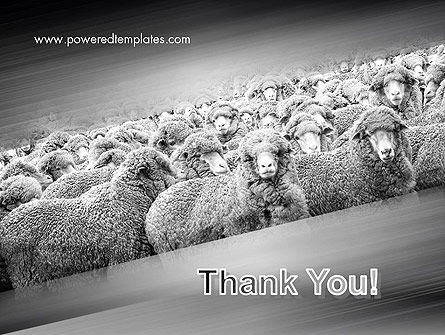 Flock of Sheep PowerPoint Template Slide 20