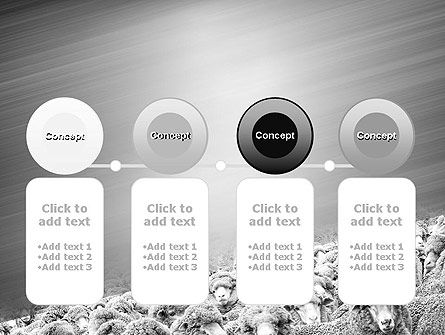 Flock of Sheep PowerPoint Template Slide 5