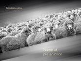 Agriculture: Flock of Sheep PowerPoint Template #11520