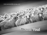 Flock of Sheep PowerPoint Template#20
