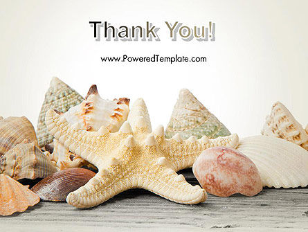 Starfish with Shells PowerPoint Template Slide 20