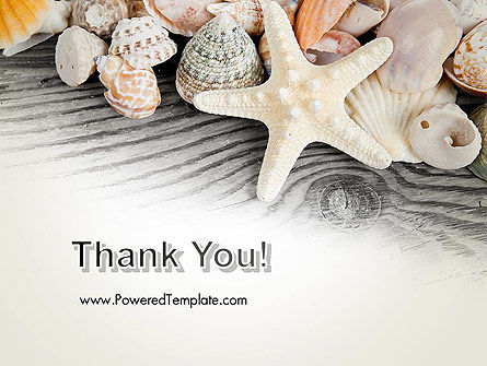 Shells and Starfish PowerPoint Template Slide 20