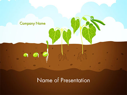 Agriculture: Peas Plant Growth Illustration PowerPoint Template #14680