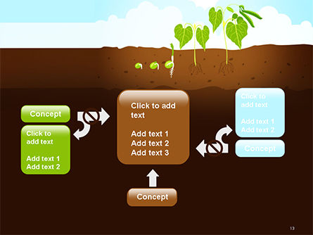 Peas Plant Growth Illustration PowerPoint Template Slide 13