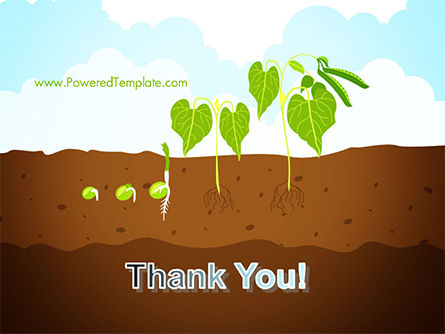 Peas Plant Growth Illustration PowerPoint Template Slide 20