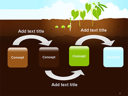 Peas Plant Growth Illustration PowerPoint Template, Slide 4, 14680, Agriculture — PoweredTemplate.com