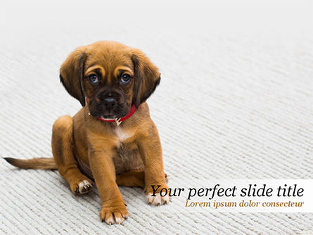 Nature & Environment: Cute Puppy PowerPoint Template #15476