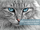 General: Cat with Blue Eyes PowerPoint Template #15490