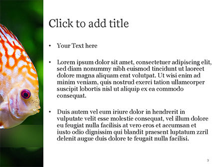 Discus Fish PowerPoint Template, Slide 3, 15506, Nature & Environment — PoweredTemplate.com