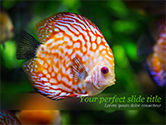 Nature & Environment: Discus Fish PowerPoint Template #15506