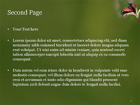 Two Ladybugs PowerPoint Template, Slide 2, 15533, Nature & Environment — PoweredTemplate.com