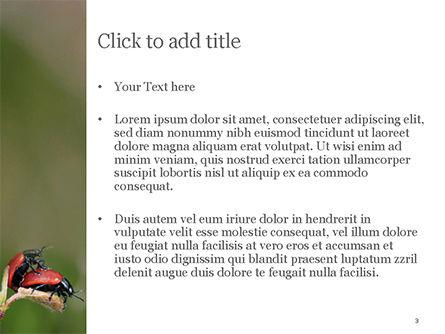 Two Ladybugs PowerPoint Template, Slide 3, 15533, Nature & Environment — PoweredTemplate.com