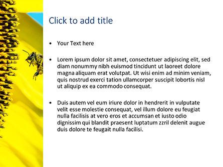 Bee Flies to Sunflower PowerPoint Template, Slide 3, 15611, Nature & Environment — PoweredTemplate.com