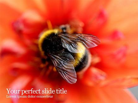 Nature & Environment: Bumblebee on Flower PowerPoint Template #15633