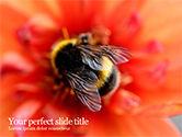Nature & Environment: Hommel Op Bloem PowerPoint Template #15633
