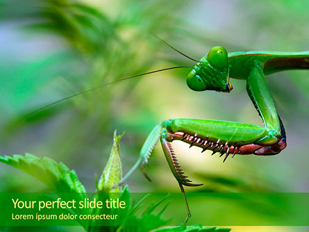 Nature & Environment: Mantis PowerPoint Template #15647