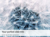 Nature & Environment: Closeup Photo of White Dandelion Flower PowerPoint Template #15682