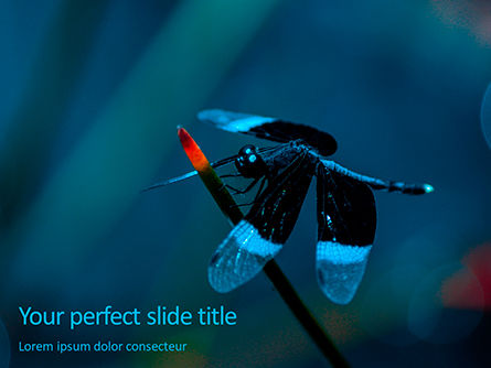 Nature & Environment: Dragonfly on a Stalk PowerPoint Template #15684