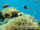 Nature & Environment: Underwater Photo of Coral Reef PowerPoint Template #15685