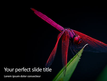 Nature & Environment: Pink Dragonfly PowerPoint Template #15697