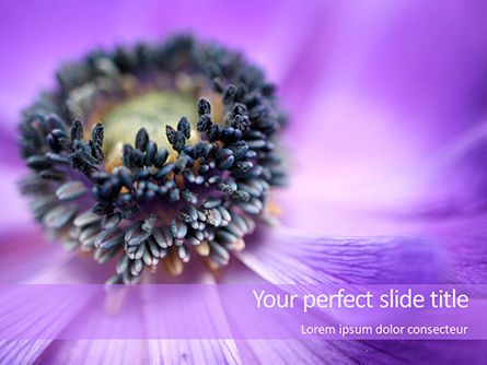 Nature & Environment: Purple Anemone PowerPoint Templates #15700