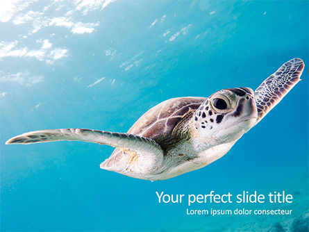 Nature & Environment: Marine Turtle PowerPoint Template #15731