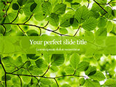 Nature & Environment: Green Tree Leaves in Sunlight Presentation #15812