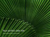 Nature & Environment: Modelo de PowerPoint Grátis - folhas da palmeira #15837