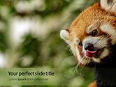 General: Modelo de PowerPoint Grátis - panda vermelha que escala na árvore #15840