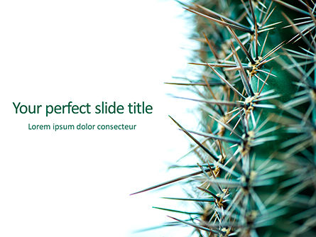 Nature & Environment: Cactus Thorns Closeup Presentation #15858