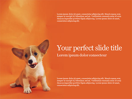 General: Cute Puppy Portrait on Orange Background Presentation #15876