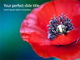 Nature & Environment: Modelo do PowerPoint - closeup de papoula vermelha #15878