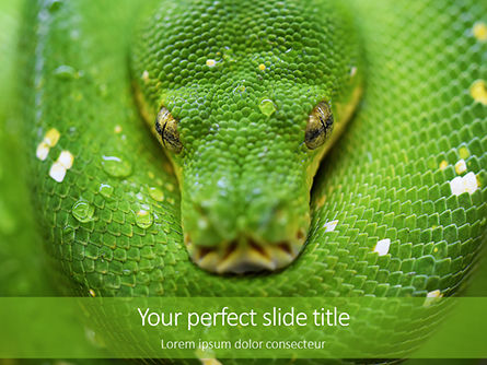 Nature & Environment: Emerald Python Coiled on Tree Presentation #15879