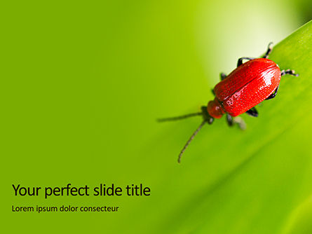 Nature & Environment: Lily Beetle Sitting on a Green Leaf Presentation #15902