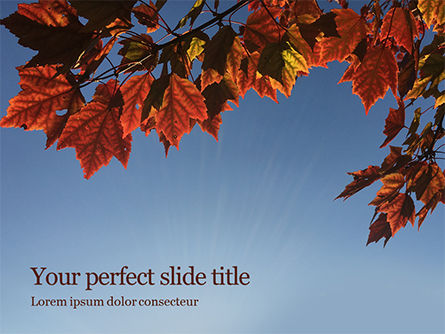 Nature & Environment: Maple Boomtak In De Herfst Tegen Blauwe Hemel PowerPoint Template #15911